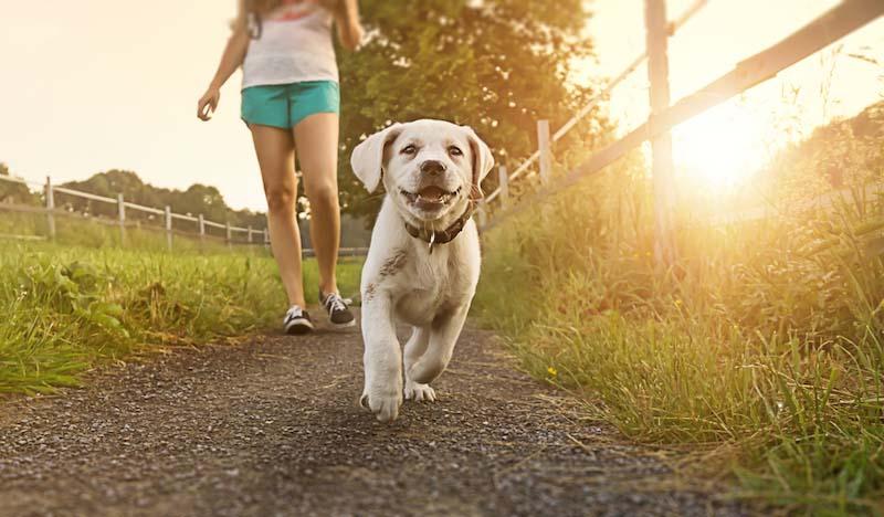 散歩中に草むらによるペット