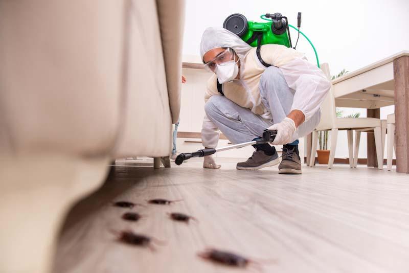 ゴキブリ専門の害虫駆除業者に依頼する
